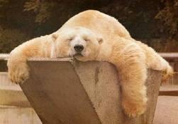 bear sleep